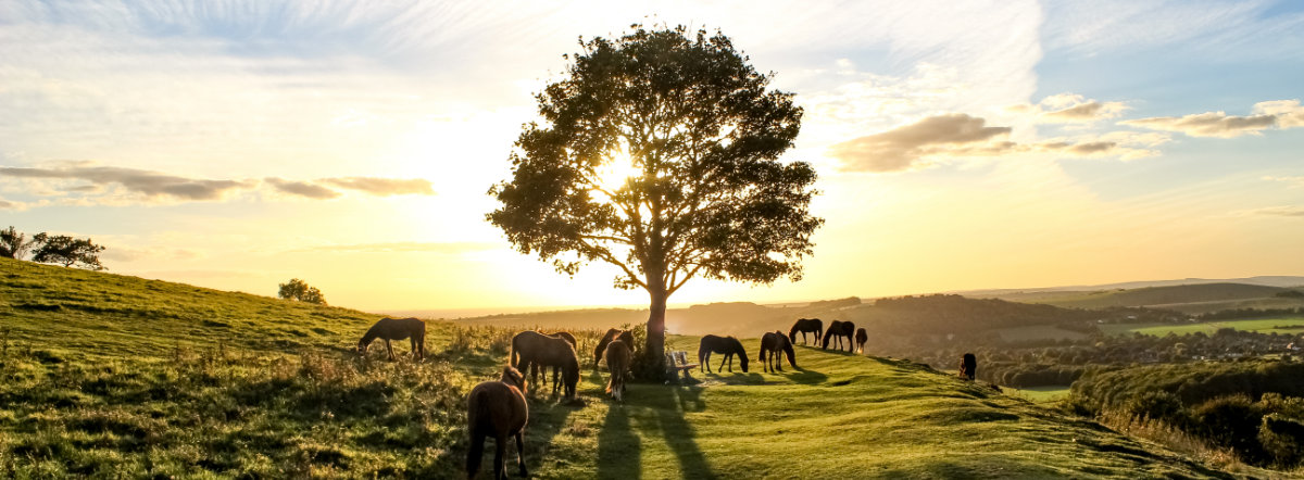 Pony Heaven Foto von Joe James